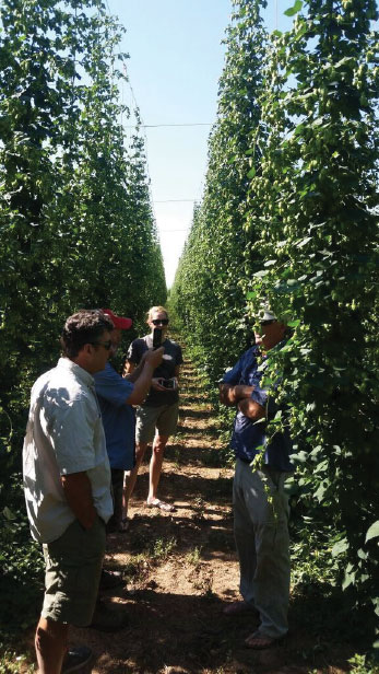 Our Hops Photo 3