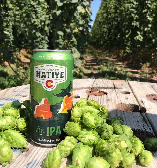 Did you know that our West Slope IPA is brewed with 100% hops from Colorado's western slope? Actually all of our beers that wear the Colorado Native badge are brewed with 100% colorado ingredients. . . . #coloradonative #coloradonativebeer #local #supportlocalagriculture #westslopebestslope #westslopeipa #coloradoagriculture #coloradoproud #100percentcoloradoingredients #availableonlyincolorado